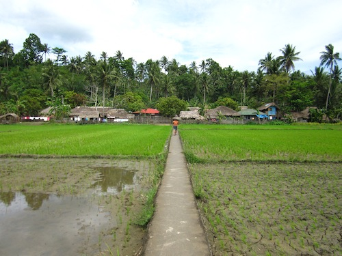 Walking across the local paddy fields