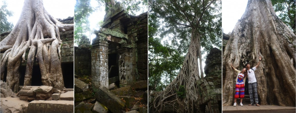 The famous ruins of Ta Prohm, overgrown with trees