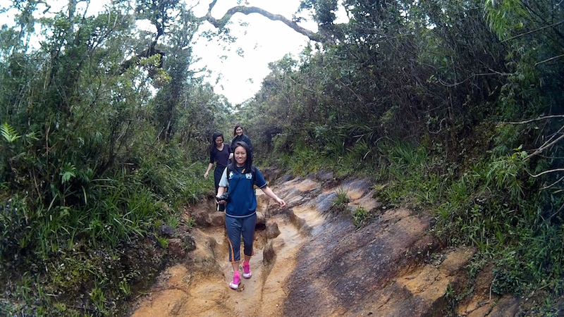Hiking through the forests of Horton Plains