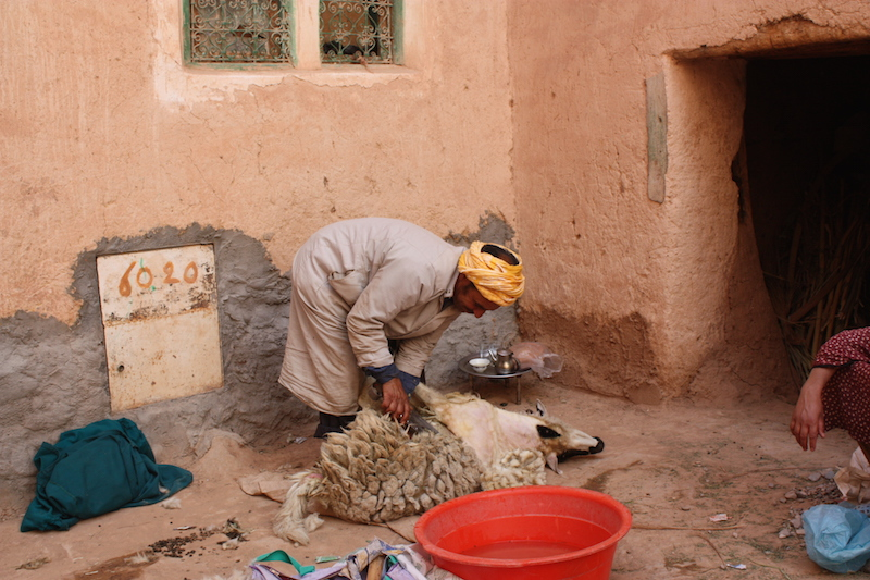 Shaving the wool of a live sheep on the narrow streets of the quarters