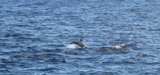 Dolphin spotted!