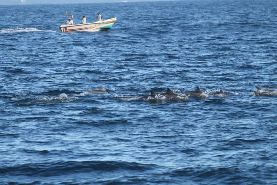 Turns out to be a whole pod of dolphins :)