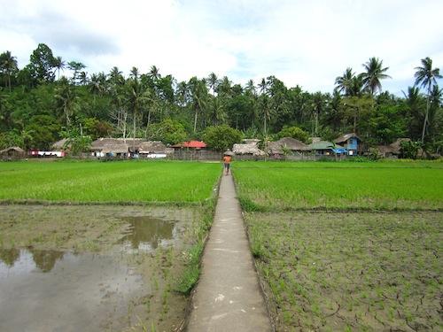 Walking across the local paddy fields