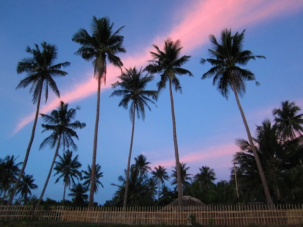 Coconut trees and pink clouds