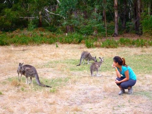 fyans-creek-kangaroos