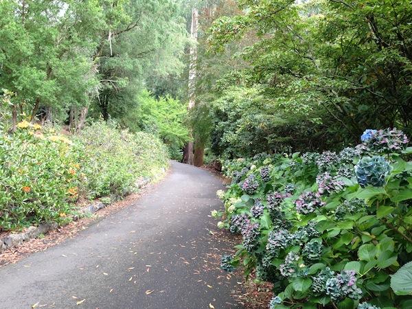 A breath of fresh air through the lush ferns, tall trees and colourful hydrangeas in the gardens