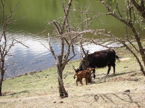 Pitacuo-baby-yak
