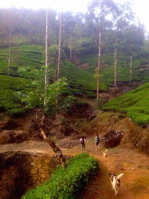 Dalhousie tea hills