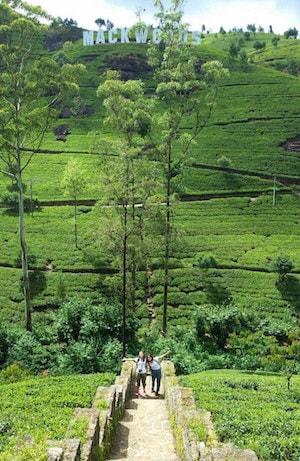 Mackwoods Sri Lanka