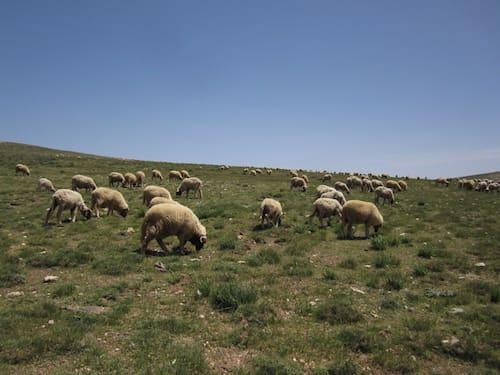 Moroccan-lamb