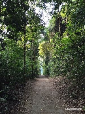 Macritchie trail