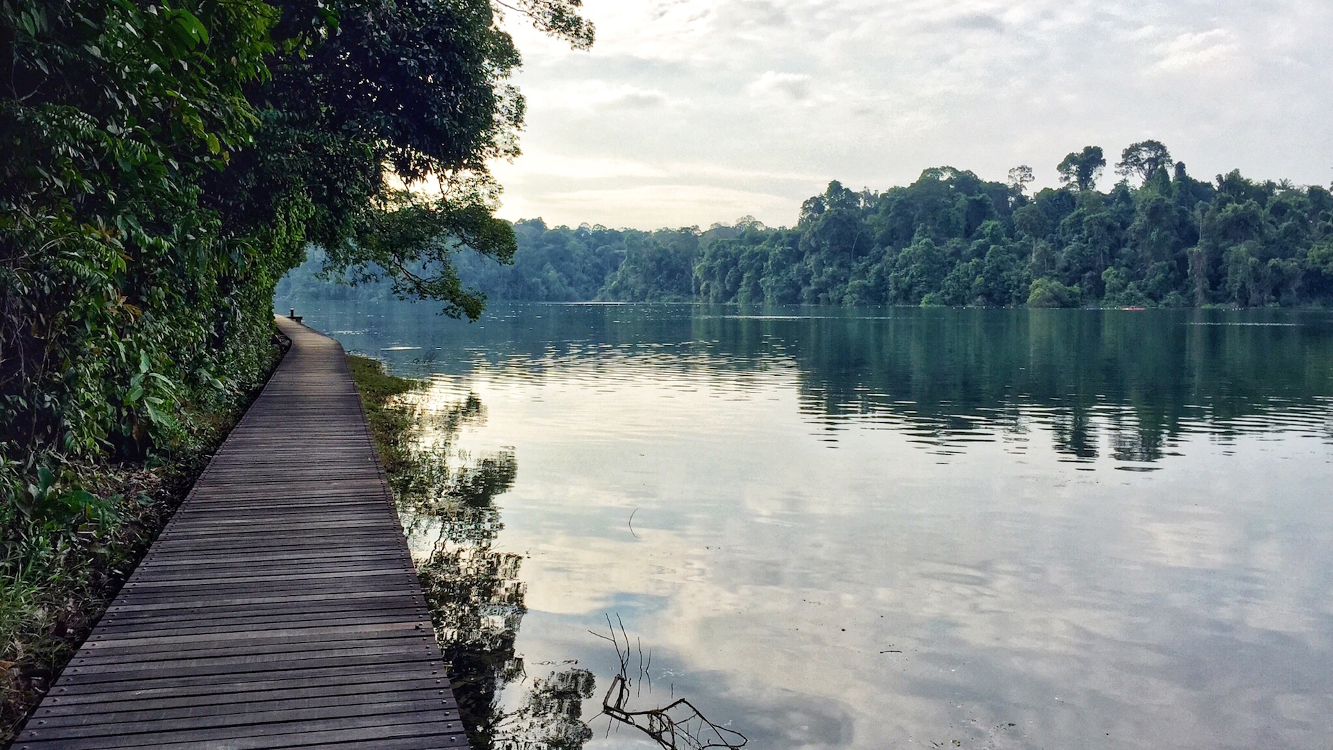 Singapore's Top Running Trails